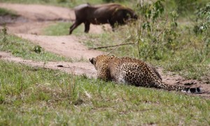 4-Days Masai Mara-Lake Nakuru Adventure