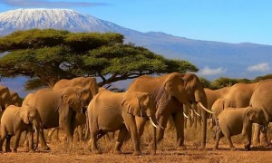 7 Days Masai Mara, Lake Nakuru and Amboseli budget Safari